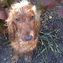 A Muddy Dog