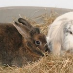 small animal care - Rabbits