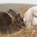 small animal care - Rabbits