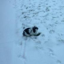 Rabbit enoying the snow