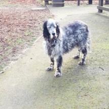 dog walks evesham