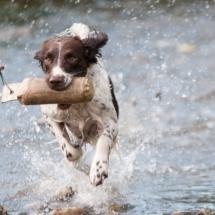 cropped-dog-1212400_1920.jpg